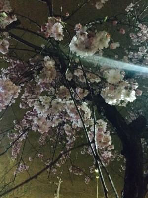 写真 2016-04-04 21 12 11