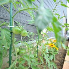 家の前には家庭菜園スペースを設け、これからの成長が楽しみ。